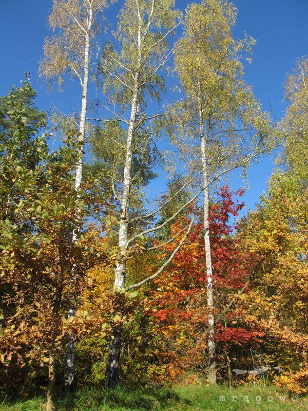 Konkurs Kolorowy las