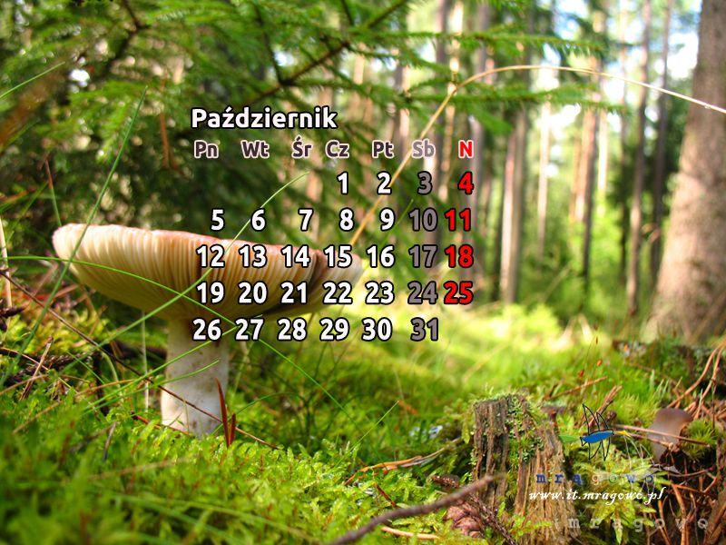 Tapety na komputer z Ziemi Mrągowskiej - październik