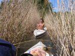 Spływ kajakowy szlakiem Dajny 2016